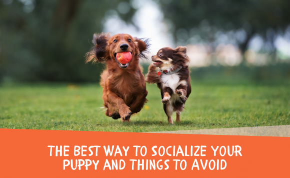 How to Socialize a Puppy and Things to Avoid