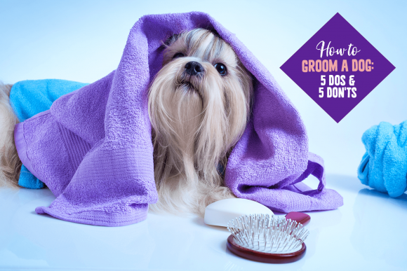 How to Groom a Dog: 5 Dos and 5 Don'ts