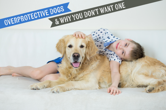 Overprotective Dogs and Why You Don't Want One