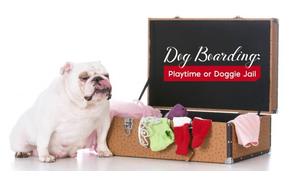 What is Dog Boarding: Playtime or Doggy Jail?