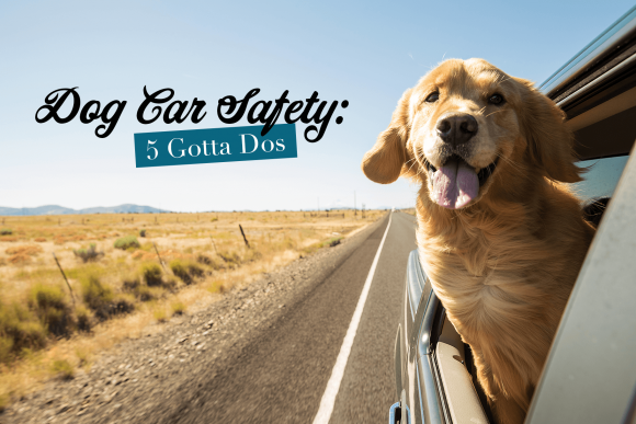 Dog Car Safety: 5 Gotta Dos