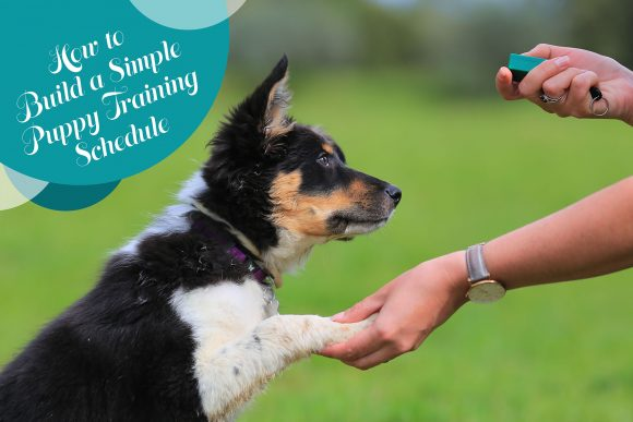 Hot to Build a Simple Puppy Training Schedule