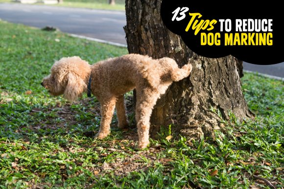13 Tips to Reduce Dog Marking