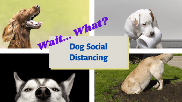 Dog Social Distancing and Utilizing a Crate to Help with Separation Anxiety