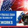 dogs who are scared of fireworks