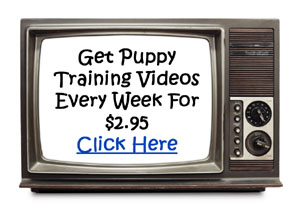 Puppy Training Tips Ad.jpg