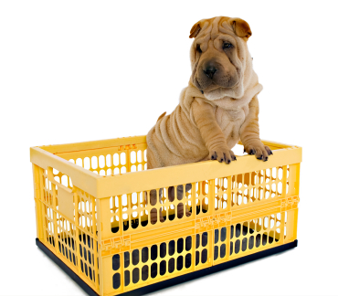 Puppy In Crate