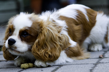 How To Get Your Puppy To Stop Eating Other Dog