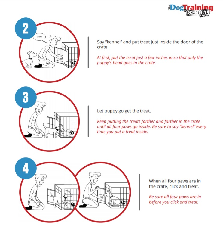 Crate Training For Puppies The Dog